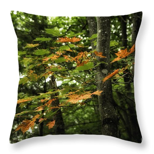 Michigan Throw Pillow featuring the photograph A Touch Of Autumn by Timothy Hacker