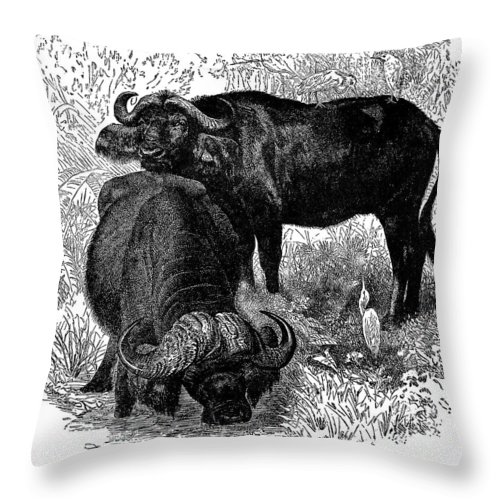 19th Century Throw Pillow featuring the photograph African Buffalo by Granger