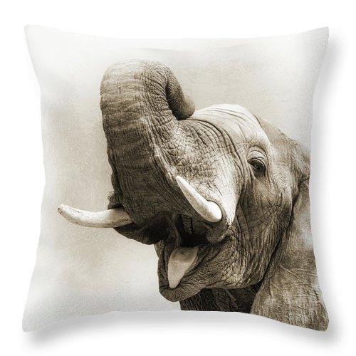 Animal Throw Pillow featuring the photograph African Elephant Closeup Square by Susan Schmitz