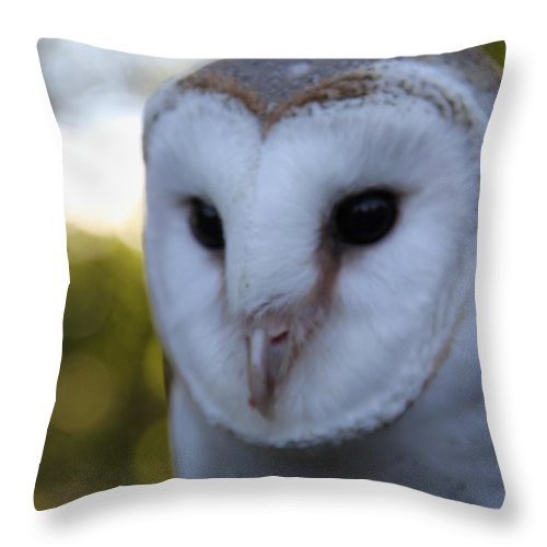 Australian Barn Owl Tyto Alba Throw Pillow featuring the photograph Australian Barn Owl by Sean Foreman
