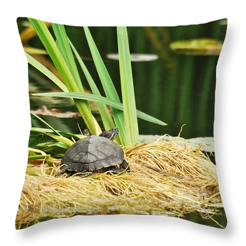 Turtles Throw Pillow featuring the photograph Babs by Donna Shahan