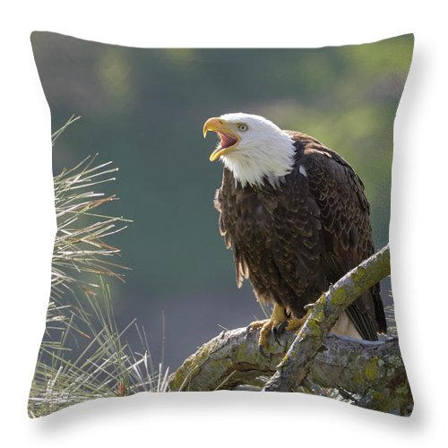 Birds Throw Pillow featuring the photograph Bald Eagle by Doug Herr