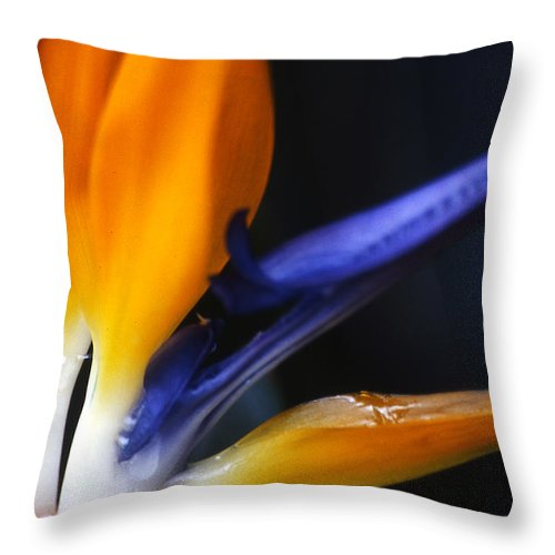Abstract Throw Pillow featuring the photograph Bird Of Paradise by Linda Parker