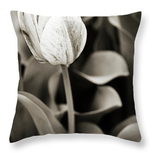 Tulip Throw Pillow featuring the photograph Black And White Tulip by Marilyn Hunt