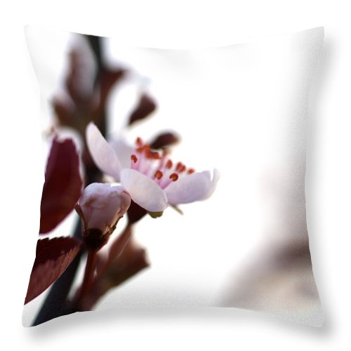 Flower Throw Pillow featuring the photograph Blossoms by Jessica Wakefield