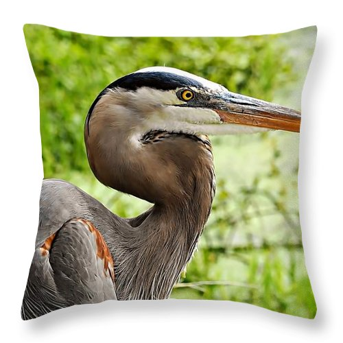Blue Heron Heads Up Throw Pillow featuring the photograph Blue Heron Heads Up by William Bosley
