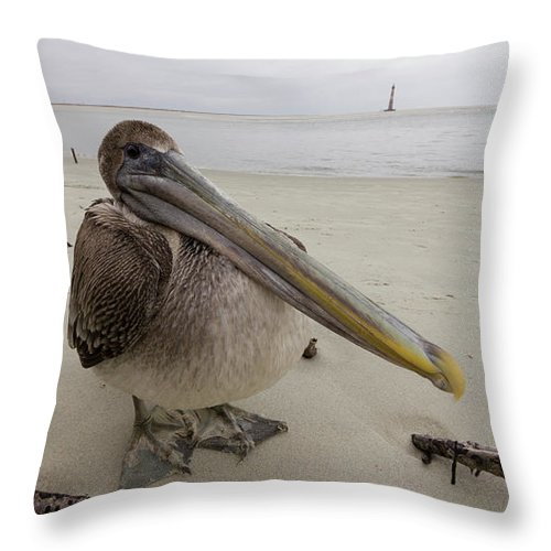 Brown Pelican Throw Pillow featuring the photograph Brown Pelican by Dustin K Ryan