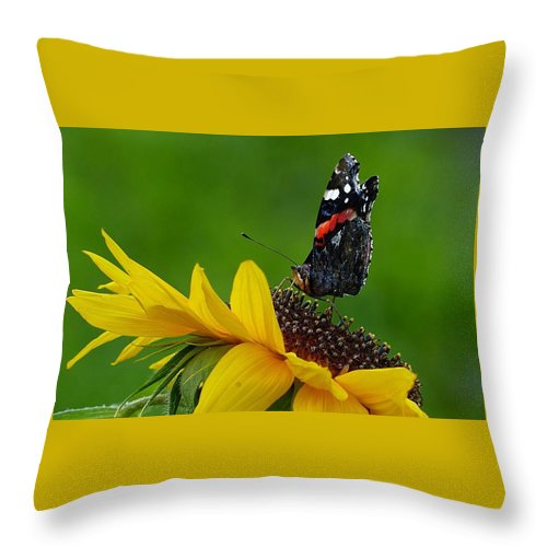 Flower Throw Pillow featuring the photograph Butterfly On Flower by FL collection