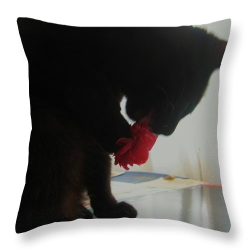 Photograph Cat Black Red Flower Camellia Throw Pillow featuring the photograph Cat Eating Camellia by Seon-Jeong Kim