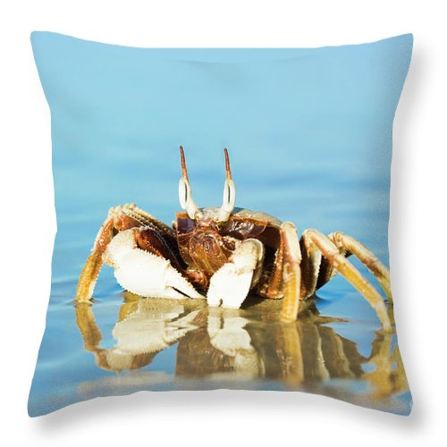 Crab Throw Pillow featuring the photograph Crab On The Tropical Beach by MotHaiBaPhoto Prints