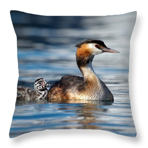 Grebe Throw Pillow featuring the photograph Crested grebe, podiceps cristatus, duck and baby by Elenarts - Elena Duvernay photo