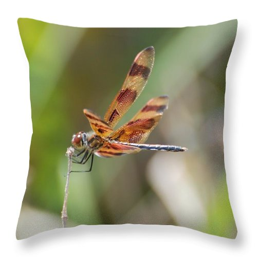 Nature Throw Pillow featuring the photograph Dragon Fly by Rob Hans