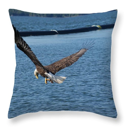 Eagles Throw Pillow featuring the photograph Flying Eagle. by Robert Rodda