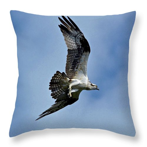 Flying Throw Pillow featuring the photograph Flying High by Carol Bradley