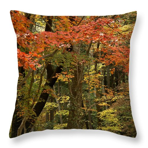 Autumn Throw Pillow featuring the photograph Forest In Autumn by Michele Burgess