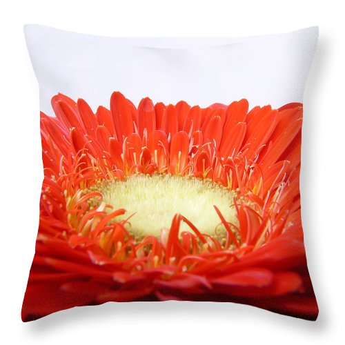 Gerbera Throw Pillow featuring the photograph Gerbera by Daniel Csoka