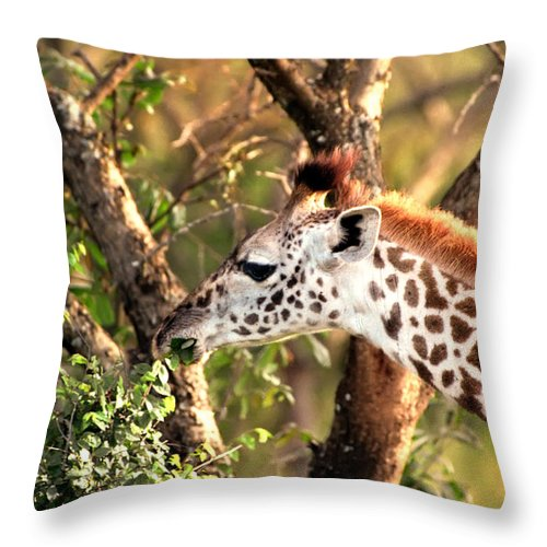 Giraffe Throw Pillow featuring the photograph Giraffe by Sebastian Musial