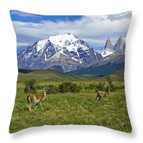 Patagonia Throw Pillow featuring the photograph Guanacos In Torres Del Paine by Michele Burgess