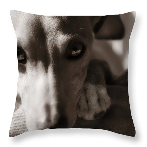 Editorial Throw Pillow featuring the photograph Heart You Italian Greyhound by Angela Rath
