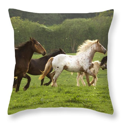 Horse Throw Pillow featuring the photograph Horses On The Meadow by Angel Ciesniarska