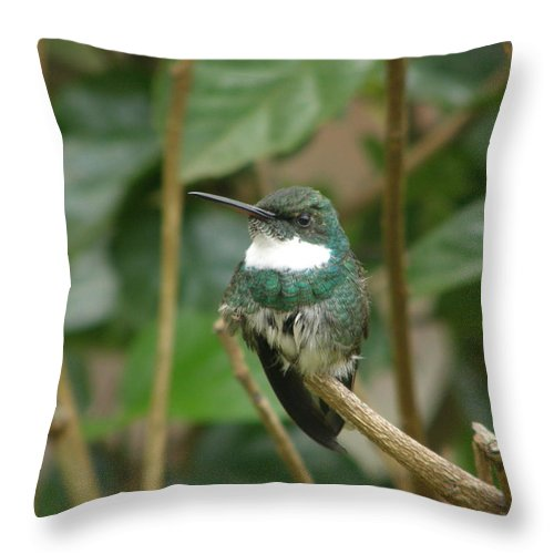 Hummingbird Throw Pillow featuring the photograph Hummingbird by Jordan Ellsworth