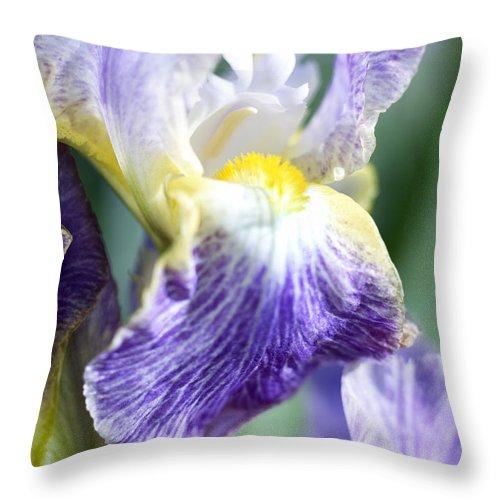 Genus Iris Throw Pillow featuring the photograph Iris Flowers by Tony Cordoza
