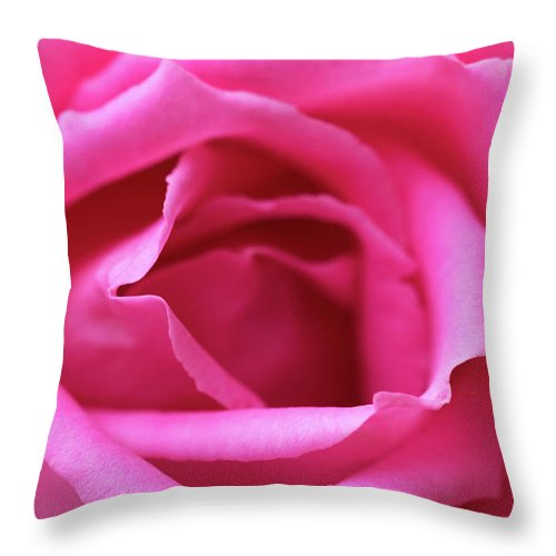 Rose Throw Pillow featuring the photograph Macro Shot Of A Beautiful Pink Rose. by Wael Alreweie