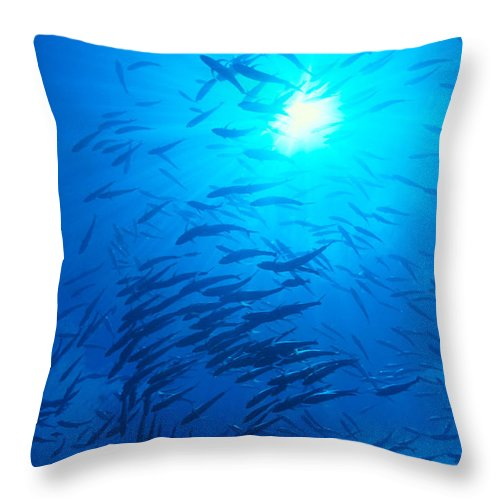 C1925 Throw Pillow featuring the photograph Micronesia Marine Life by Ed Robinson - Printscapes