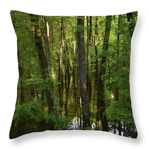 Scenic Tours Throw Pillow featuring the photograph Morning Light by Skip Willits