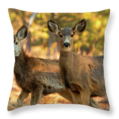 Deer Throw Pillow featuring the photograph Mule Deer In The Woods by Steve Krull