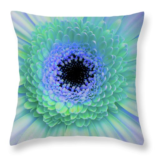 Gerber Throw Pillow featuring the photograph Multicolor Blues by JAMART Photography
