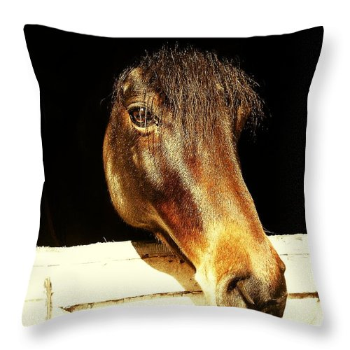 Equine Throw Pillow featuring the photograph Noble Stallion by JAMART Photography