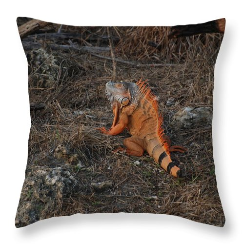 Brush Throw Pillow featuring the photograph Orange Iguana by Rob Hans