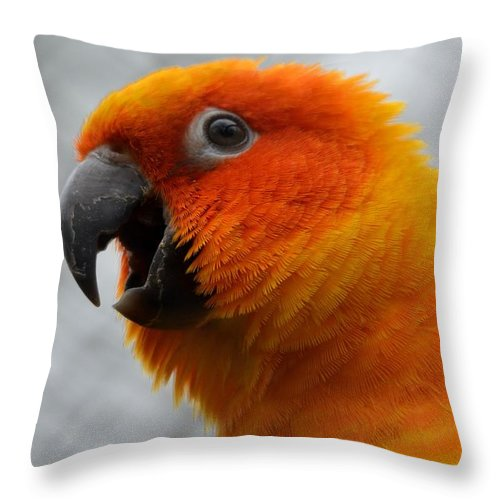 Parrot Throw Pillow featuring the photograph Parrott by FL collection