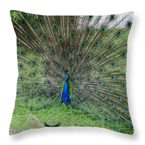 Animals Throw Pillow featuring the photograph 2 Peacocks And A Black Pussy Cat by Rob Hans