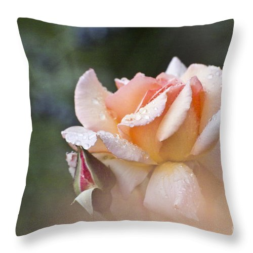 Rose Throw Pillow featuring the photograph Pink Rose by Heiko Koehrer-Wagner