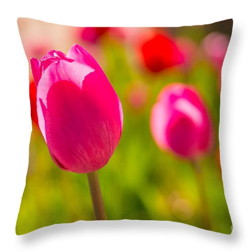 Flowers Throw Pillow featuring the photograph Pink Tulips by Beverly Tabet