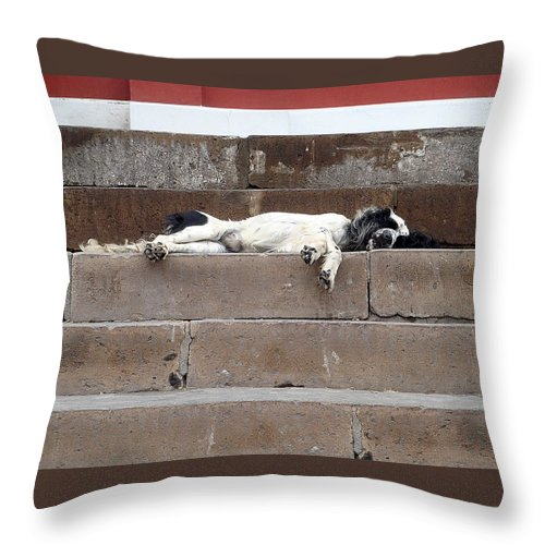 Karen Zuk Rosenblatt Art And Photography Throw Pillow featuring the photograph Street Dog Sleeping On Steps by Karen Zuk Rosenblatt