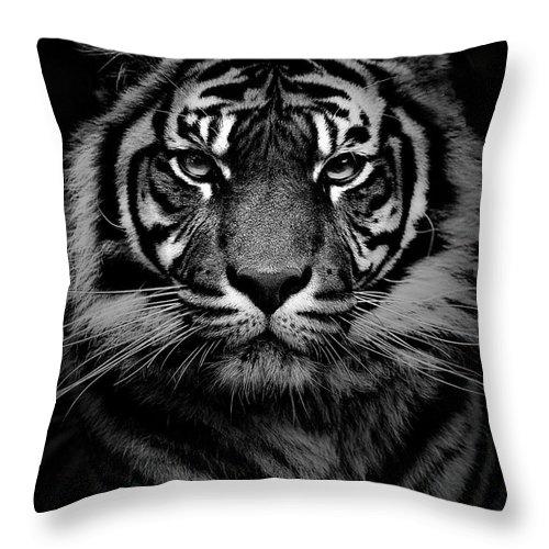 Sumatran Tiger Throw Pillow featuring the photograph Sumatran tiger by Sheila Smart Fine Art Photography