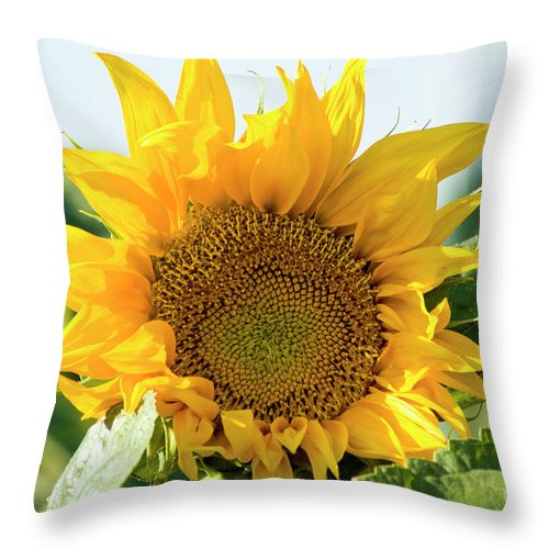 Sunflower Throw Pillow featuring the photograph Sunflower Field by Amos Gal