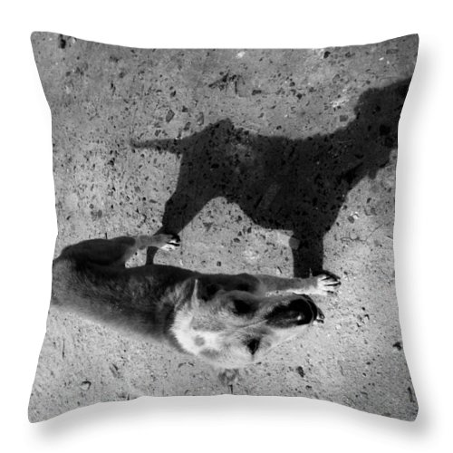 Al-ahyaa Throw Pillow featuring the photograph The Inner Me by Jez C Self