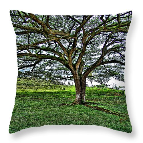 Throw Pillow featuring the photograph Tree by Galeria Trompiz