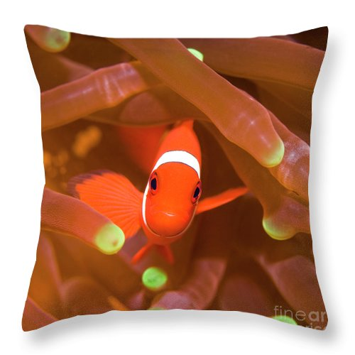 Clownfish Throw Pillow featuring the photograph Tropical Fish Clownfish by MotHaiBaPhoto Prints