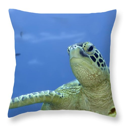 Turtle Throw Pillow featuring the photograph Turtle by MotHaiBaPhoto Prints