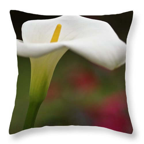 Calla Throw Pillow featuring the photograph White Calla by Heiko Koehrer-Wagner