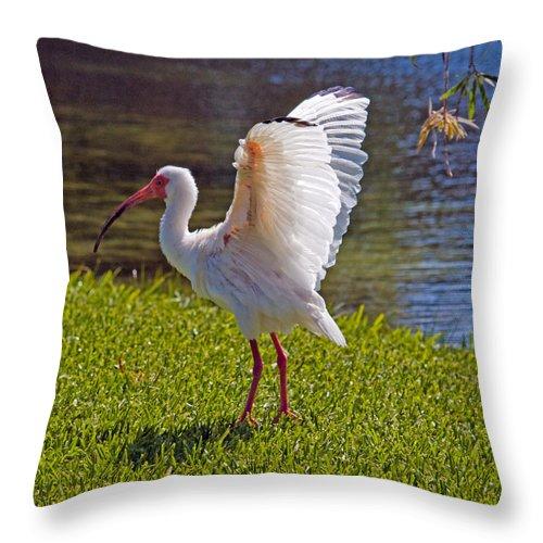 Ibis; White; Bird; Florida; Frog; Pollywogs; Pond; Seabird; Shore; Coast; Water; Fowl; Waterfowl; Fe Throw Pillow featuring the photograph White Ibis by Allan Hughes