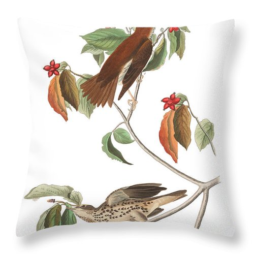 Wood Thrush Throw Pillow featuring the painting Wood Thrush by John James Audubon