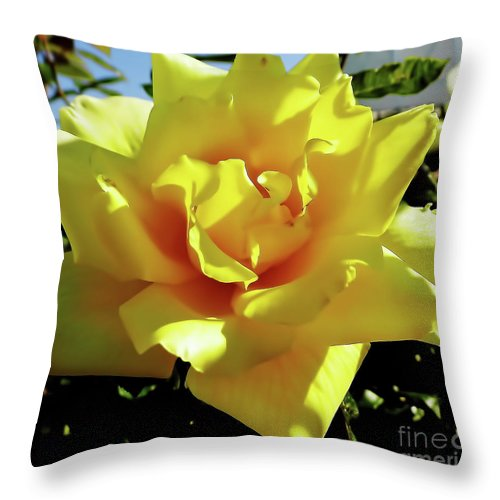 Rose Throw Pillow featuring the photograph Yellow Rose Beauty by D Hackett