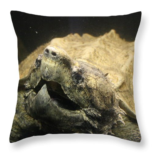 Turtle Throw Pillow featuring the photograph 200 Pounds Of Ugly by David Dunham