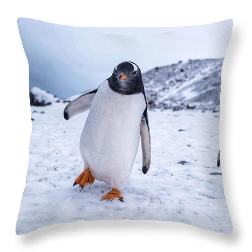Penguin Throw Pillow featuring the photograph 3 Amigos by Rand